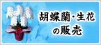 胡蝶蘭・生花の販売
