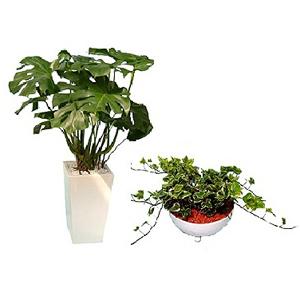 観葉植物(鉢植えタイプ)