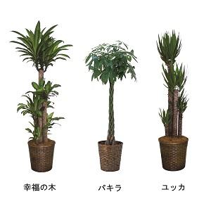 509500100701観葉植物